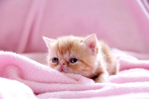 小奶猫一天吃多少顿 小猫多久喂一次