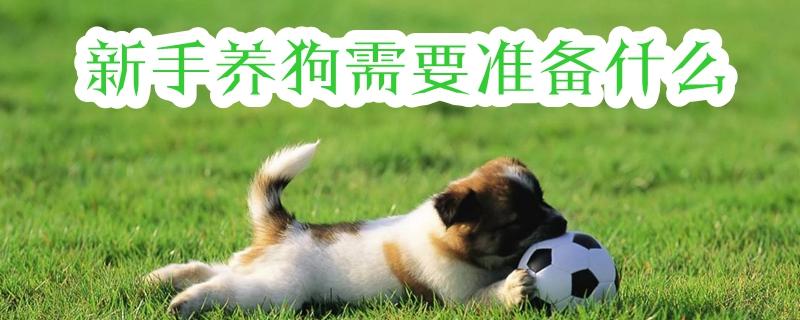 新手养狗需要准备什么