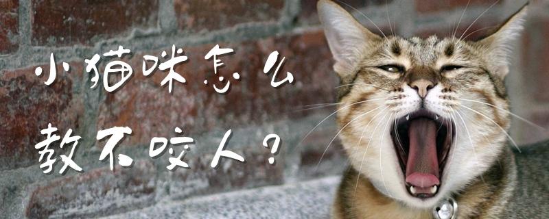小猫咪怎么教不咬人