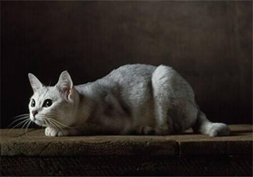 猫咪犯错后怎么调教 猫咪犯错调教方法