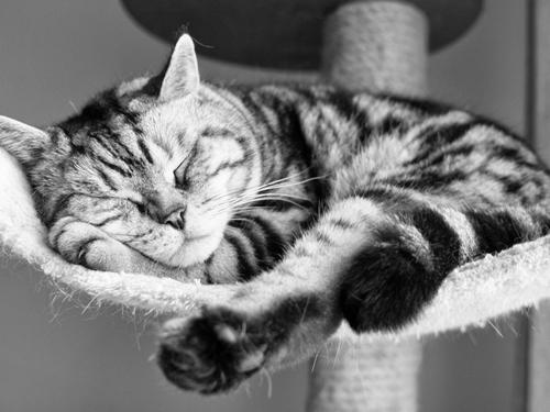 猫咪耳朵掉毛怎么办 猫咪耳朵大面积掉毛分析