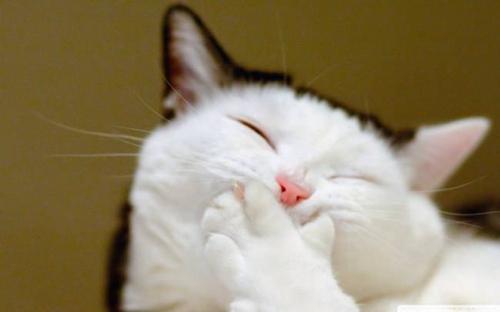 如何治疗猫丝虫病 猫咪得丝虫病原因