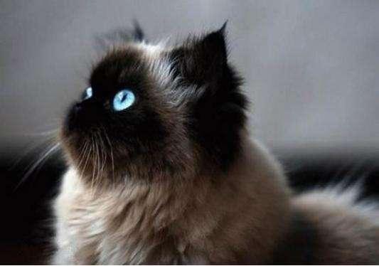 怎么预防猫咪生病 做好五项预防猫咪远离生病