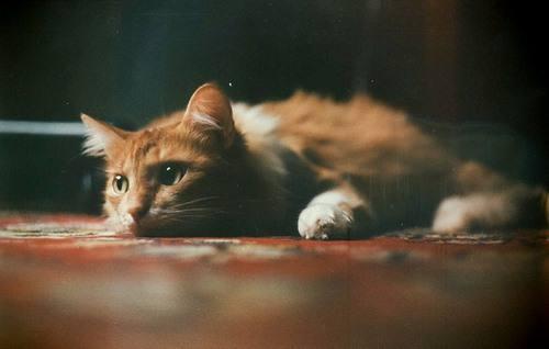 如何治疗猫咪维生素缺乏症 猫咪维生素缺乏症表现