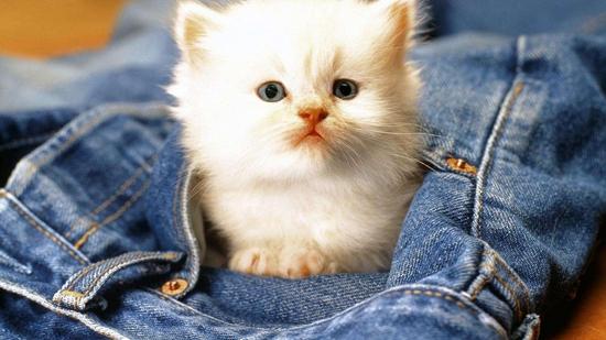 猫驱虫药种类有哪些 猫咪驱虫药种类汇总