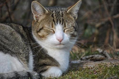 猫咪白内障是什么原因 宠物猫白内障治疗