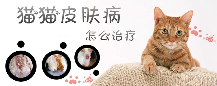 猫猫皮肤病怎么治疗1