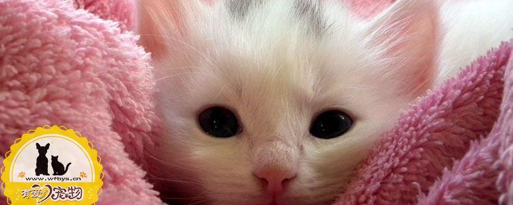 如何训练猫不爬床 巧用惩罚猫不记仇