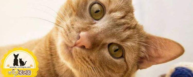 猫蜱虫怎么治疗 猫蜱虫会传染给人吗