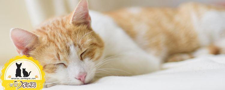 母猫产后护理 母猫也要注意坐月子