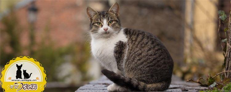 猫咪需要打什么针 猫咪疫苗要如何注射你知道吗