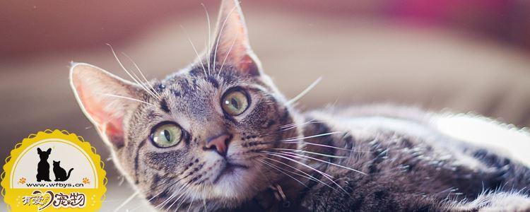 猫青光眼和白内障区别 猫咪眼疾干预措施