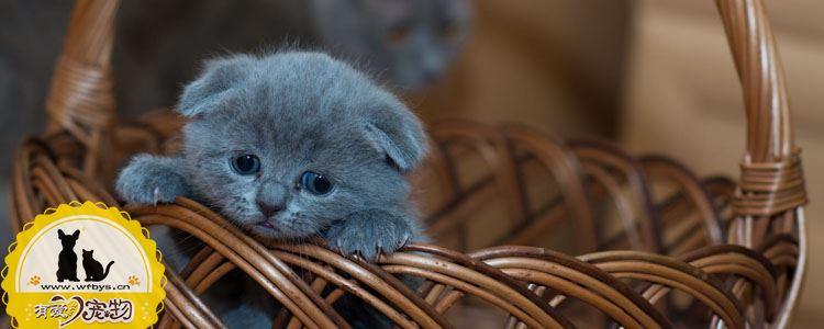 猫剪脐带教程 教你如何接生小猫