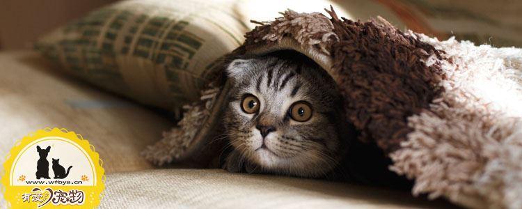 怎么培养小猫性格 你家猫性格暴躁吗