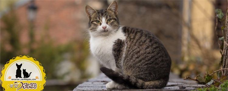 训练猫咪上厕所要注意什么 需要注意猫砂及厕所的选择