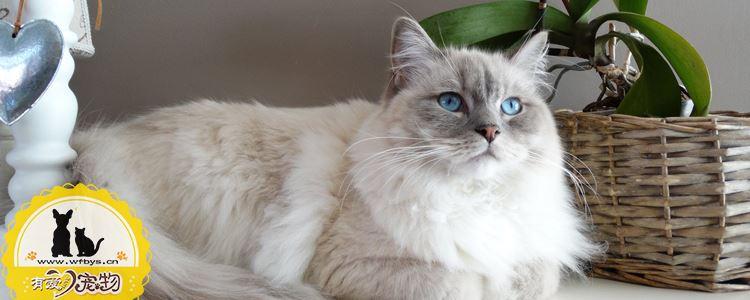 母猫产后容易出现的问题 避免母猫吃幼猫须知