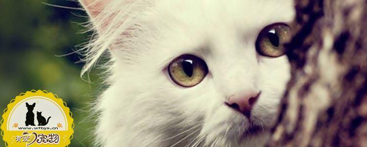 猫咪耳螨怎么清理 教你最详细的上药方法