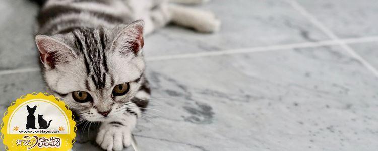 猫咪外耳炎症状及治疗 猫咪外耳炎你了解多少