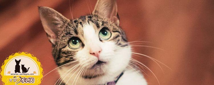 猫咪感染耳螨的症状 关于耳螨的防治手册
