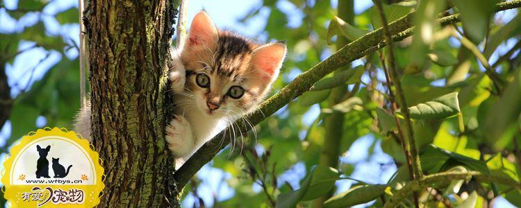 猫异食症的表现 你还以为只是猫咪的好奇心吗