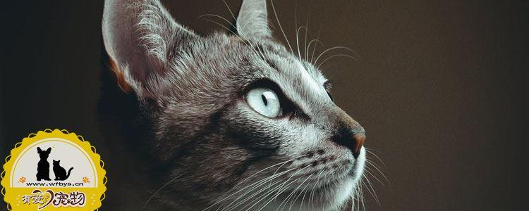 猫咪驱虫药哪种好 选对药事半功倍
