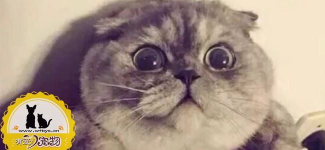 猫咪跳蚤怎么消灭 猫咪跳蚤圈有用吗?