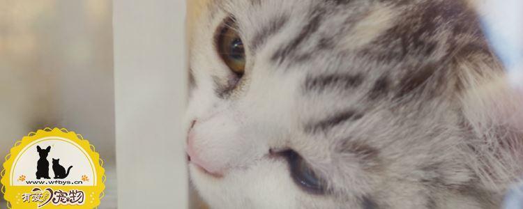 猫积食了怎么办 主人必须点进来了解的猫积食解决办法!
