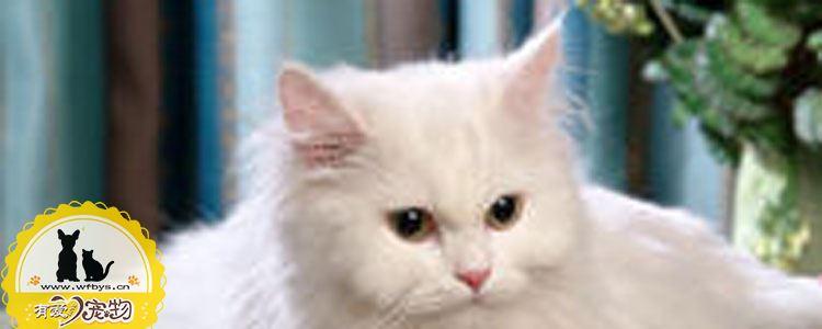 猫食欲不振消瘦嗜睡 猫食欲不振消瘦嗜睡怎么回事