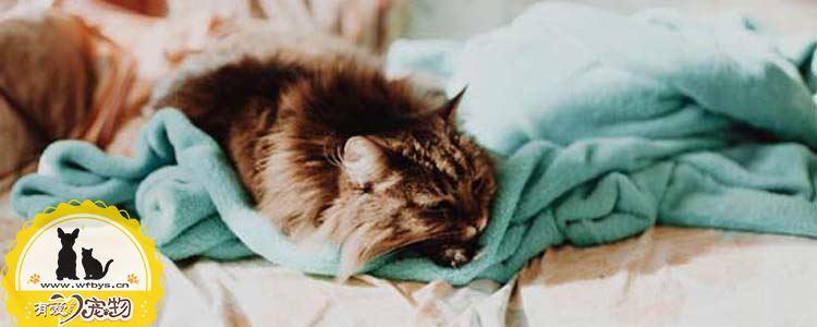 猫干呕没有食欲 可能是毛球症作祟