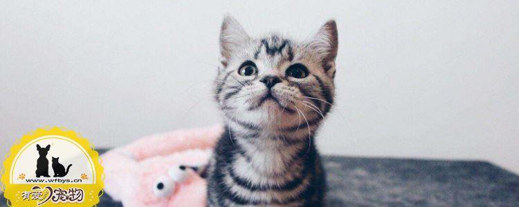猫积食的症状 猫积食是不可忽视的!