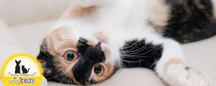 猫绝育前注意事项 这样做降低手术风险