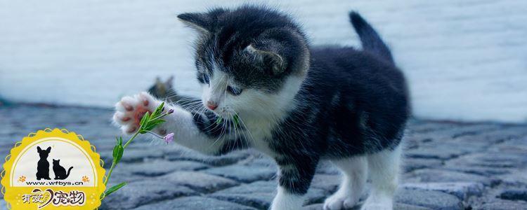 猫只吃干粮可以么 偏食竟会导致疾病