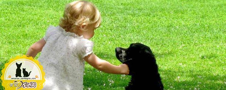 狗狗注射疫苗的时间 最全的狗狗疫苗流程