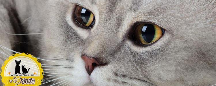 猫发情的小知识 棉签大法其实并不好