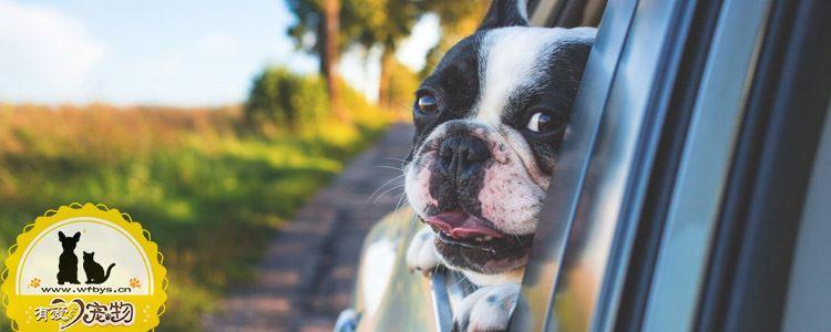 狗狗常见皮肤病与治疗 最全狗狗皮肤病应对方案