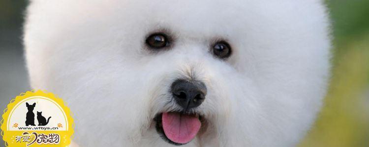 螨虫对狗狗的危害 主人要小心狗狗患上螨虫病