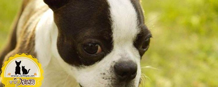 怎么纠正狗狗乱咬东西 纠正狗狗坏习惯的小妙招