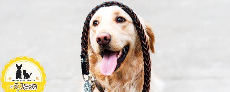 狗真菌性皮肤病症状 该如何治疗