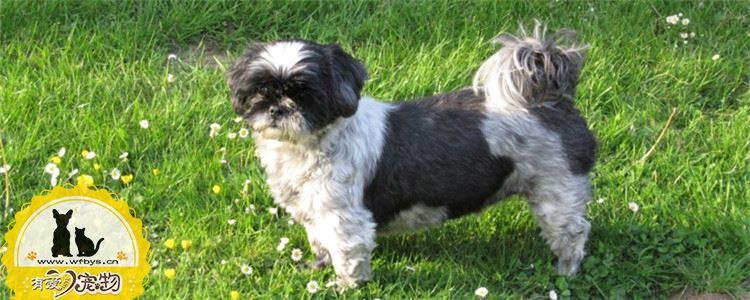 狗狗缺乏微量元素的表现 狗狗缺乏微量元素会怎么样