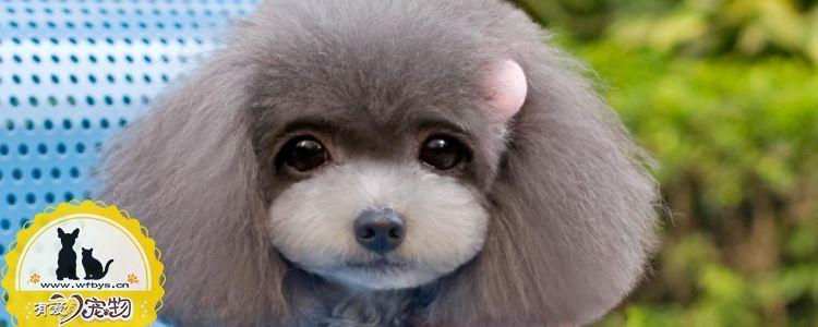 狗呕吐是什么引起的 狗呕吐一定是细小吗