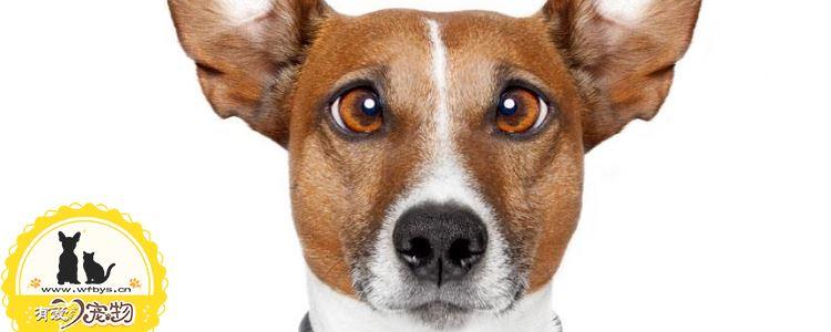 狗狗肠胃炎的病因和症状 如何能预防治疗狗狗肠胃炎