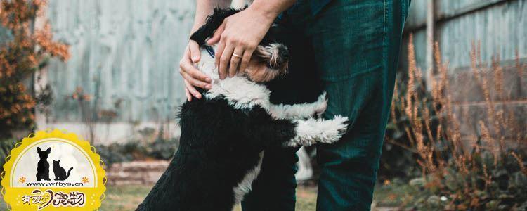 狗狗耳螨怎么治 根治耳螨有妙招