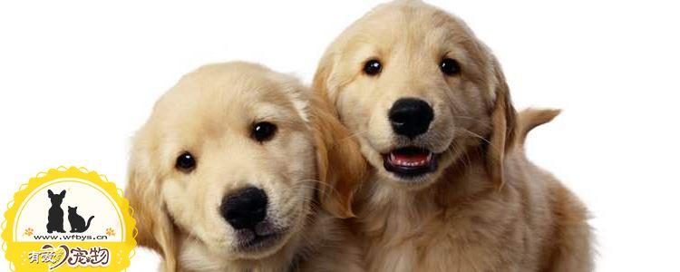 狗身上常见的寄生虫 主人们要长个心眼了