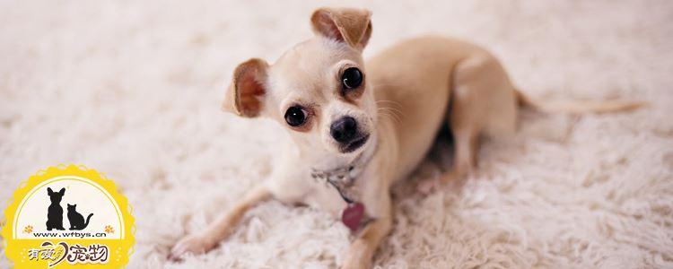 狗得了角膜炎怎么治疗 这些有效治疗方法别怪我没说