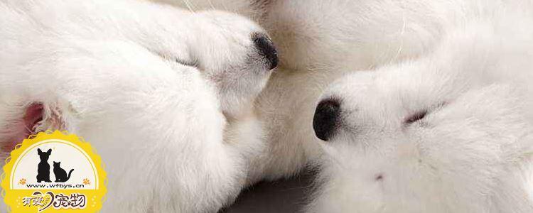 狗皮肤病有哪些种类 该如何防治