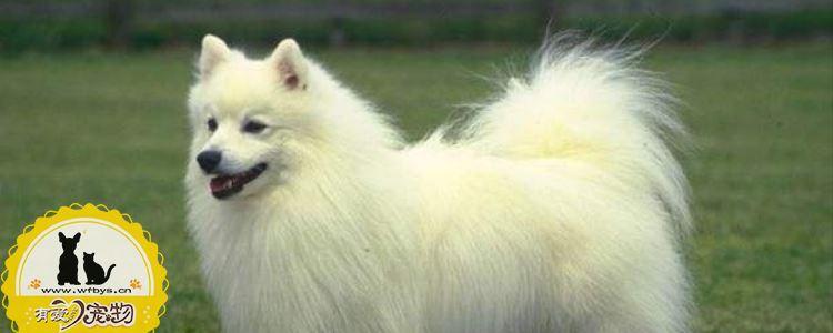 狗狗寄生虫症状 狗狗寄生虫你知道吗