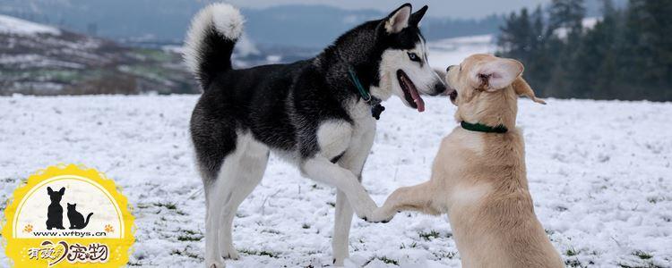 狗狗感冒消炎药有哪些 小心乱用药致耳聋