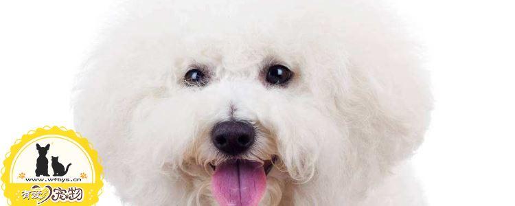 如何判断狗狗体内有没有虫 怎么驱虫你知道吗
