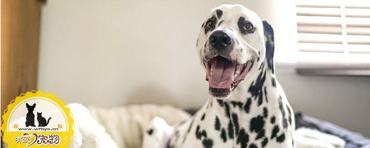 狗狗感冒症状及治疗 换季健康大作战