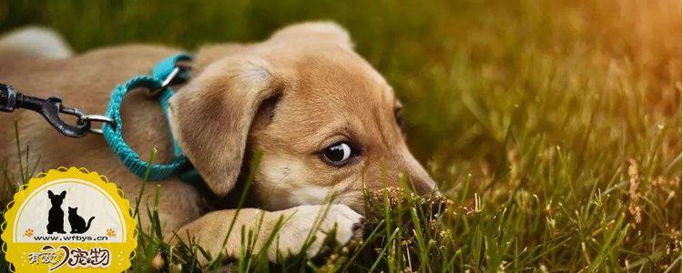 狗狗呕吐怎么治疗用药 你知道你家狗狗为什么呕吐吗